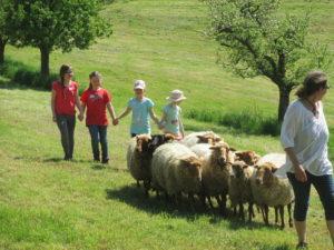 In der Bildmitte ist eine Gruppe Schafe auf einer baumbestandenen Wiese zu sehen. Vor den Schafen geht ein Erwachsener, dahinter vier Kinder, die sich an der Hand halten.